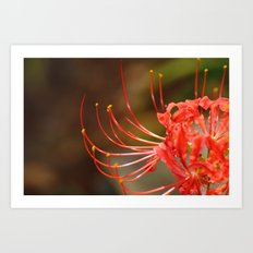 Blooms for Dorothy Art Print