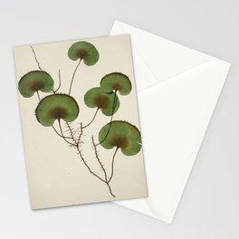 Kidney Fern Stationery Cards