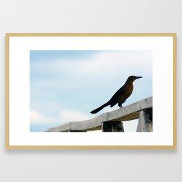 Bird collection _ 01 Framed Art Print