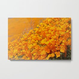 Golden Meadow of California Poppies in Bloom by Reay of Light Photography Metal Print