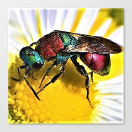 Multi-colored Cuckoo Wasp Portrait #1 Canvas Print