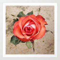 Pop Up Rose Art Print