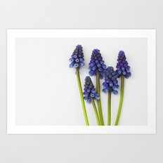 Muscari - Blue Grape - JUSTART © Art Print