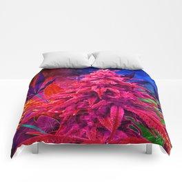 Hot Pink Kola Comforters