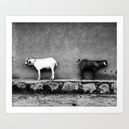 Goats Art Print