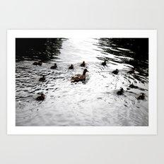 Duck 01 Art Print
