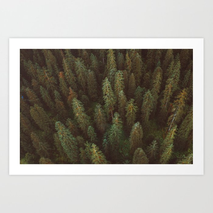 Forest From Above Art Print
