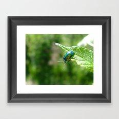 Green beetle Framed Art Print
