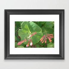 Honeysuckle Vine Framed Art Print