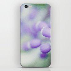 Muscari Rhapsody iPhone & iPod Skin