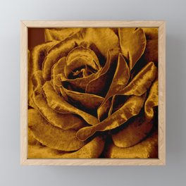 copper velvet rose Framed Mini Art Print