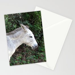 Watercolor Wild Donkey 03, St John, USVI Stationery Cards