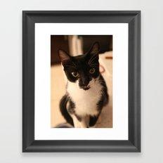 Spot Framed Art Print