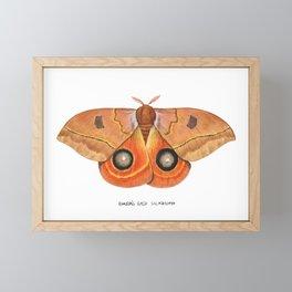 Randa's Eyed Silkmoth (Automeris randa) Framed Mini Art Print