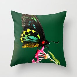 Male Cairns Birdwing Butterfly Throw Pillow