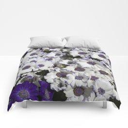 Cineraria White and Purple Comforters