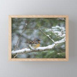 Male Varied Thrush, No. 2 Framed Mini Art Print
