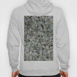 Fittonia albivenis Hoody