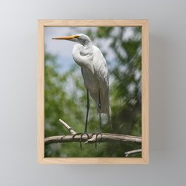 Great Egret - Utah Framed Mini Art Print