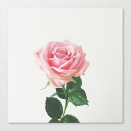 Spring Rose Canvas Print