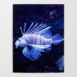 Sea World Lion Fish Poster
