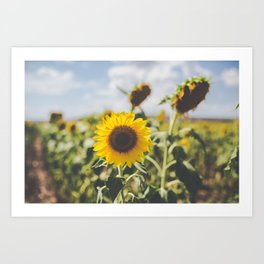 Allora | Sunflowers Art Print