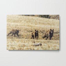 Three Bears Metal Print
