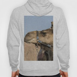 a camel in the desert of israel on the border of egypth Hoody