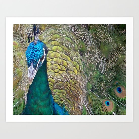 Peacock Up Close Art Print