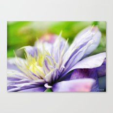 Painted Clematis Canvas Print