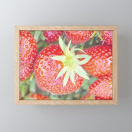 Beautiful fresh strawberries Framed Mini Art Print