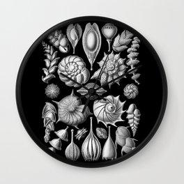 Sea Shells (Thalamophora) by Ernst Haeckel Wall Clock