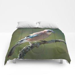 Eurasian Jay Garrulus Glandarius Comforters