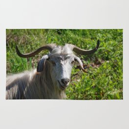 Portrait of A Horned Goat Grazing Rug