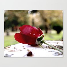 Aesthetic rose Canvas Print