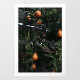 Fruit Tree Art Print