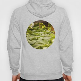 Potato Plants Photography PrintPotato Plants Photography Print Hoody