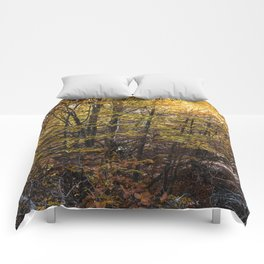 Beech forest in Autumn Comforters