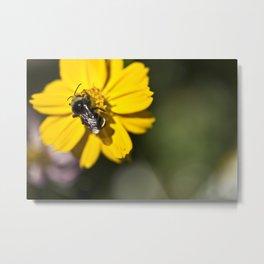 lone bee  Metal Print