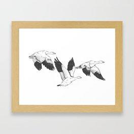 Snow Geese Framed Art Print