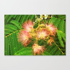 beauty of nature 2 Canvas Print