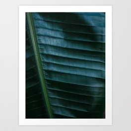 Botanical photography print | Dark green tropical leaf of a palm | Jungle Wanderlust art Art Print