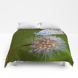 The butterfly and the delicate plant Comforters