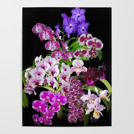 Orchids - Cool colors! Poster