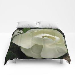 Fleur de Magnolia Comforters