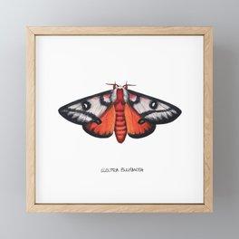Electra Buckmoth  (Hemileuca electra) Framed Mini Art Print