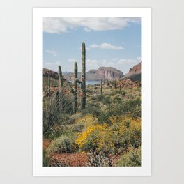 Arizona Spring Art Print