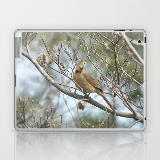 Lady Cardinal Laptop & iPad Skin