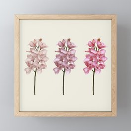 Three tones orchids Framed Mini Art Print