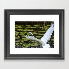 Egret Take Off Framed Art Print